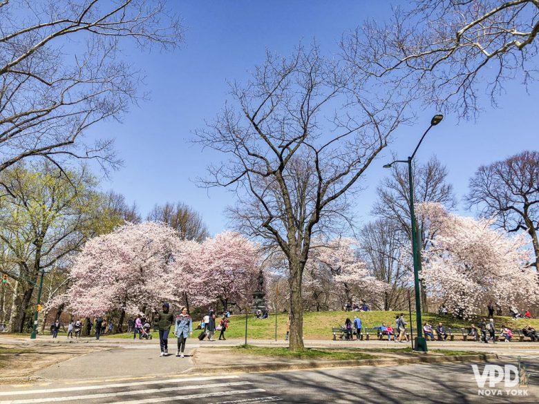Mesmo com as estações bem definidas, podem rolar algumas surpresas no clima dependendo da época. Foto de árvores de cerejeira floridas em um parque, com o céu azul ao fundo
