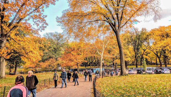 Foto de Nova York no outono, com as árvores do Central Park em tons de amarelo e laranja