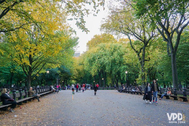 Foto das árvores no Central Park, com folhas verdes e amareladas
