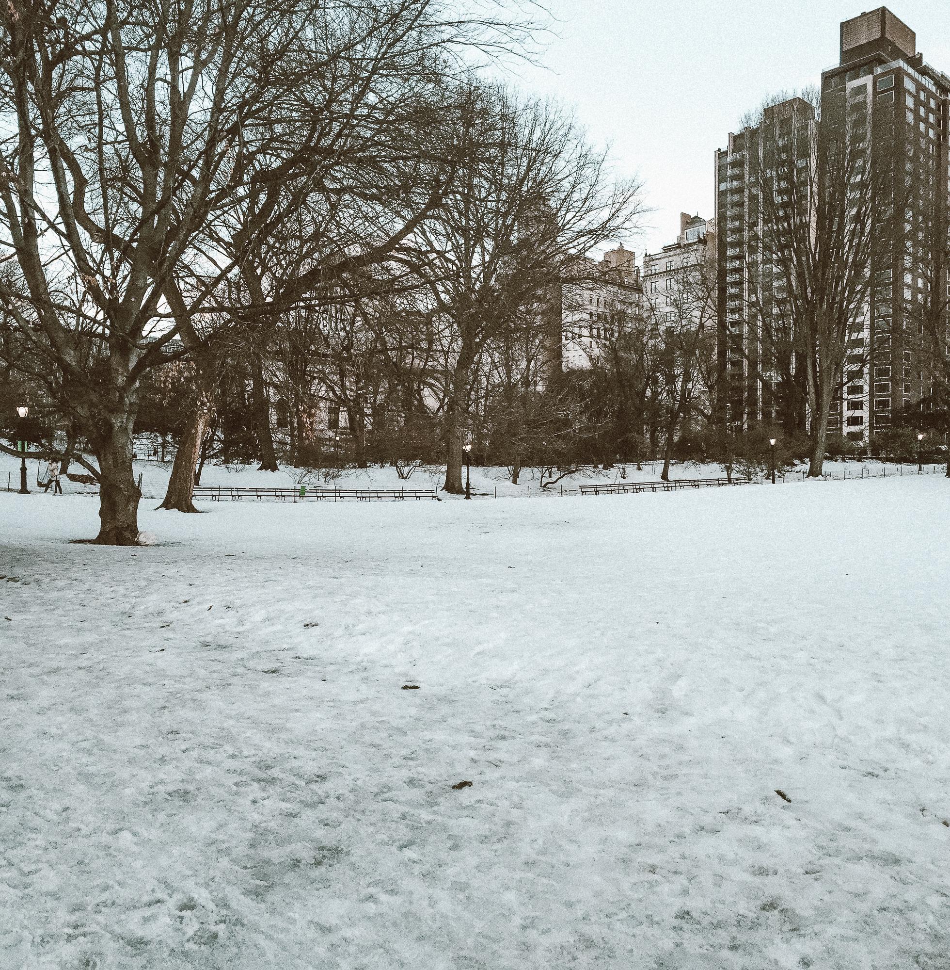 Foto de árvores e prédios de Nova York com uma camada de neve sobre o chão