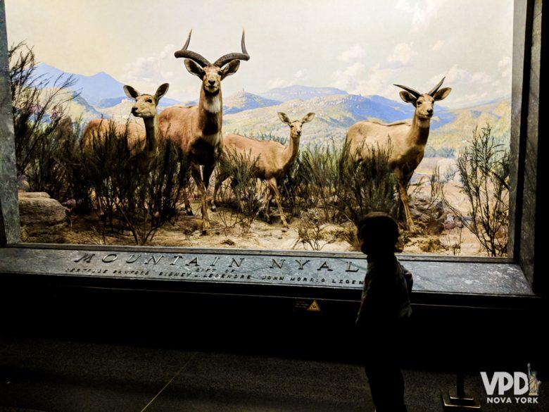Foto de uma criança observando uma exposição de animais empalhados no Museu de História Natural