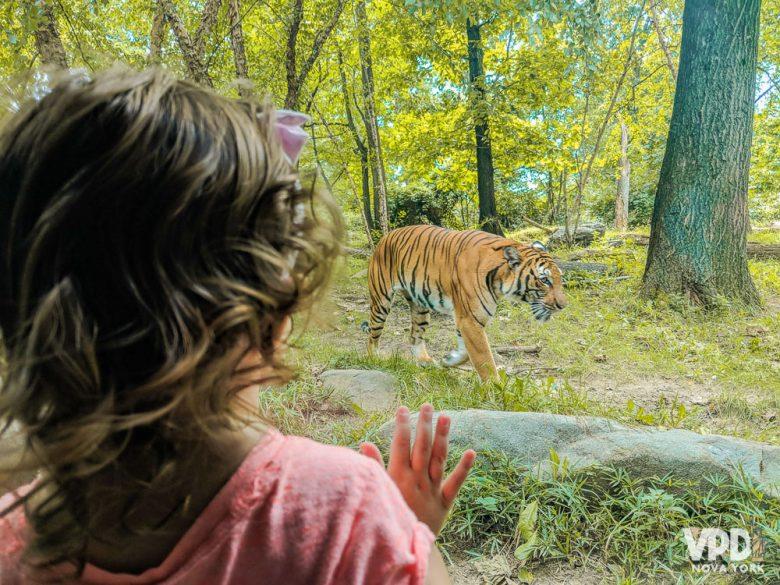Foto de uma criança observando um tigre no zoológico através do vidro